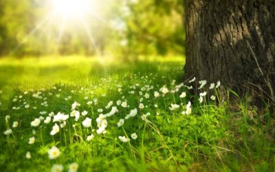 Frühlingsangebot – gültig bis Ende März!